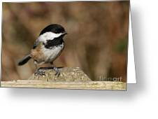 Chickadee On Wooden Fence Greeting Card