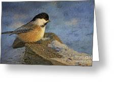 Chickadee Winter Perch Greeting Card