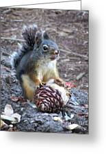 Chickaree Stripping A Pine Cone - John Muir Trail Greeting Card