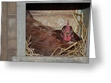 Chicken Box Greeting Card