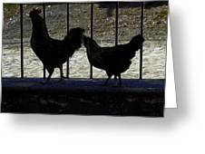 Chicken In Silhousette Greeting Card