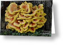 Chicken Of The Woods Greeting Card