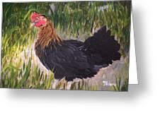 Chicken Study 1 Greeting Card