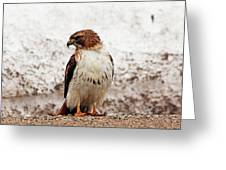 Chickenhawk Greeting Card