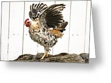 Chickens In Bird In Hand 2 Greeting Card