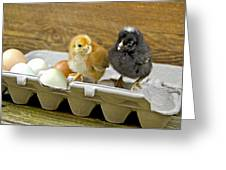 Chicks And Eggs Greeting Card
