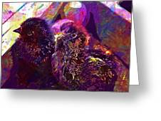 Chicks Hatched Fluffy Young Animal  Greeting Card