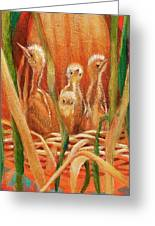 Chicks In The Reeds Greeting Card
