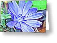 Chicory On Trail To North Beach Park In Ottawa County, Michigan  Greeting Card