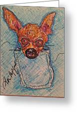 Chihuahua In A Pocket Greeting Card