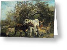 Child And Sheep In The Country Greeting Card
