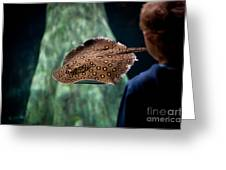 Child Watching Spotted Ray Fish Greeting Card