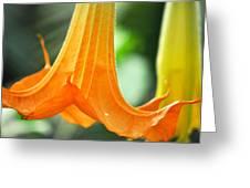 Children's Garden Angel's Trumpet Greeting Card