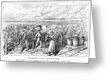 Chile: Wine Harvest, 1889 Greeting Card