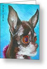 Chili Chihuahua Greeting Card