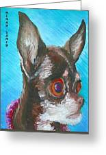 Chili Chihuahua Greeting Card