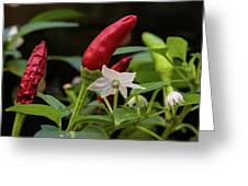 Chilli Flowers Greeting Card