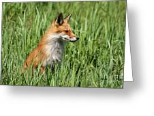 Chillin Vixen  Greeting Card