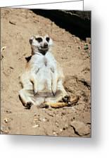 Chilling Meerkat Greeting Card
