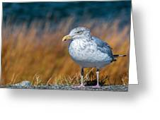 Chilling Seagull Greeting Card