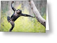 Chimp In Flight Greeting Card