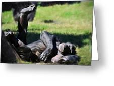 Chimp Sunbathing Greeting Card