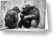 Chimpanzee Pair Greeting Card