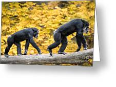 Chimpanzee Pair IIi Greeting Card