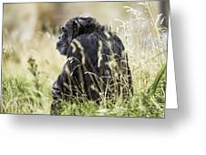 Chimpanzee Sitting In The Grass Greeting Card