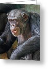 Chimpanzee Sitting Greeting Card