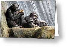 Chimpanzee Snacking On A Sunflower Greeting Card