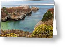 China Cove Greeting Card