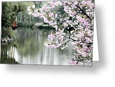 Chinese Cherry Blossoms  Greeting Card