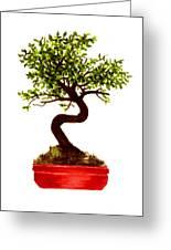 Chinese Elm Bonsai Tree Greeting Card
