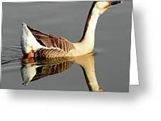 Chinese Goose Greeting Card