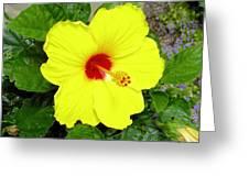 Chinese Hibiscus Greeting Card