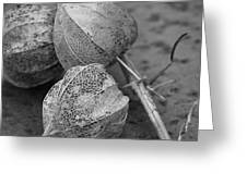 Chinese Lanterns In Black And White Greeting Card