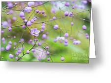Chinese Meadow Rue Flowers Opening Greeting Card
