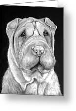 Chinese Sharpei Greeting Card
