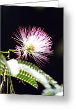 Chinese Silk Blossom Greeting Card
