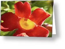 Chinese Trumpet Flower In La Mesa California Greeting Card