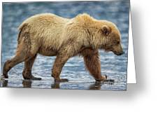 Chinitna Bay Brown Bear Greeting Card