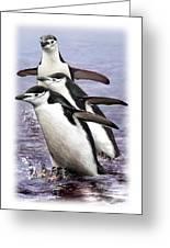 Chinstrap Penguins 1 Greeting Card
