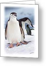 Chinstrap Penguins 2 Greeting Card