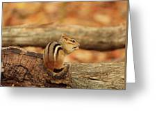 Chip On A Log Greeting Card