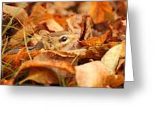 Chipmunk Among The Leaves Greeting Card
