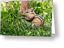 Chipmunk Cutie Greeting Card