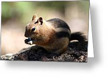 Chipmunk Eating A Piece Of Blue Candy Greeting Card