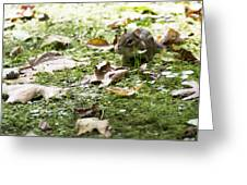 Chipmunk Getting Ready For Winter Greeting Card