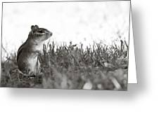 Chipmunk In Black And White Greeting Card